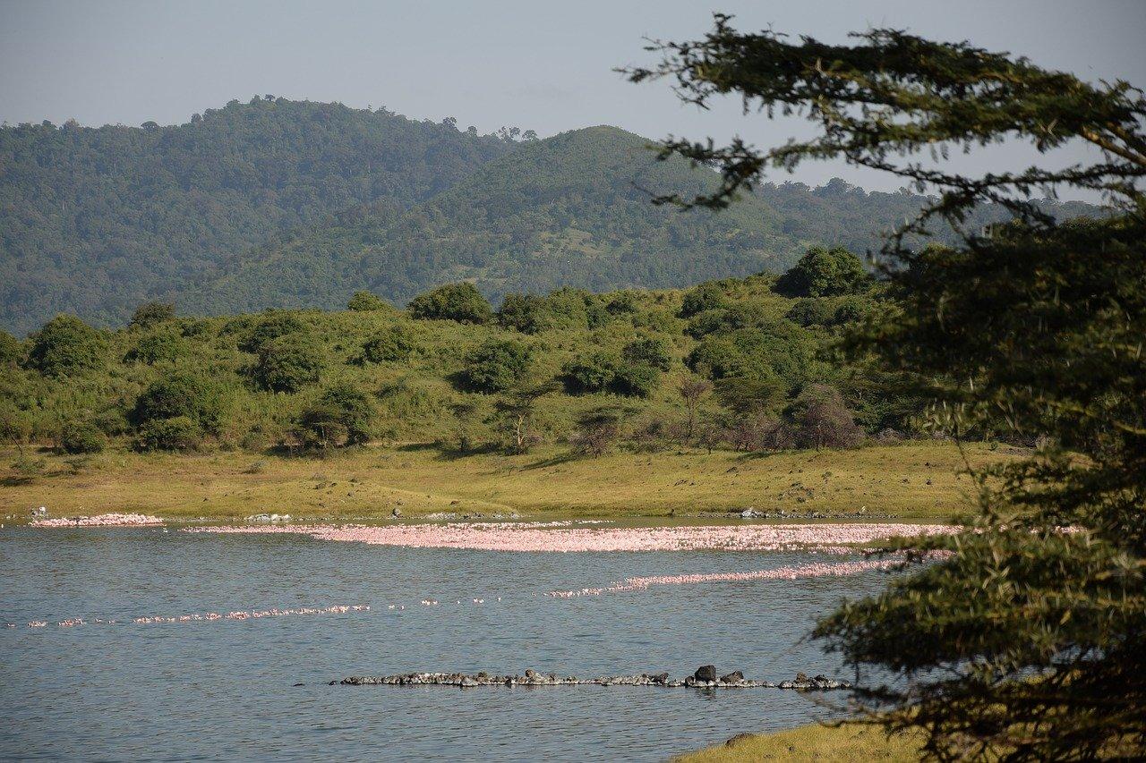 Arusha Tanzania NP Momela